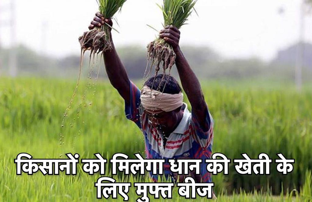 किसानों को मिलेगा मुफ्त धान का बीज